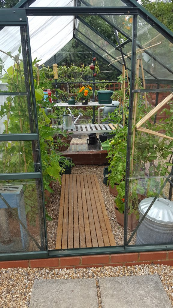 Tomatoes and cucumbers doing well in the greenhouse